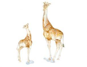 SCS giraffes